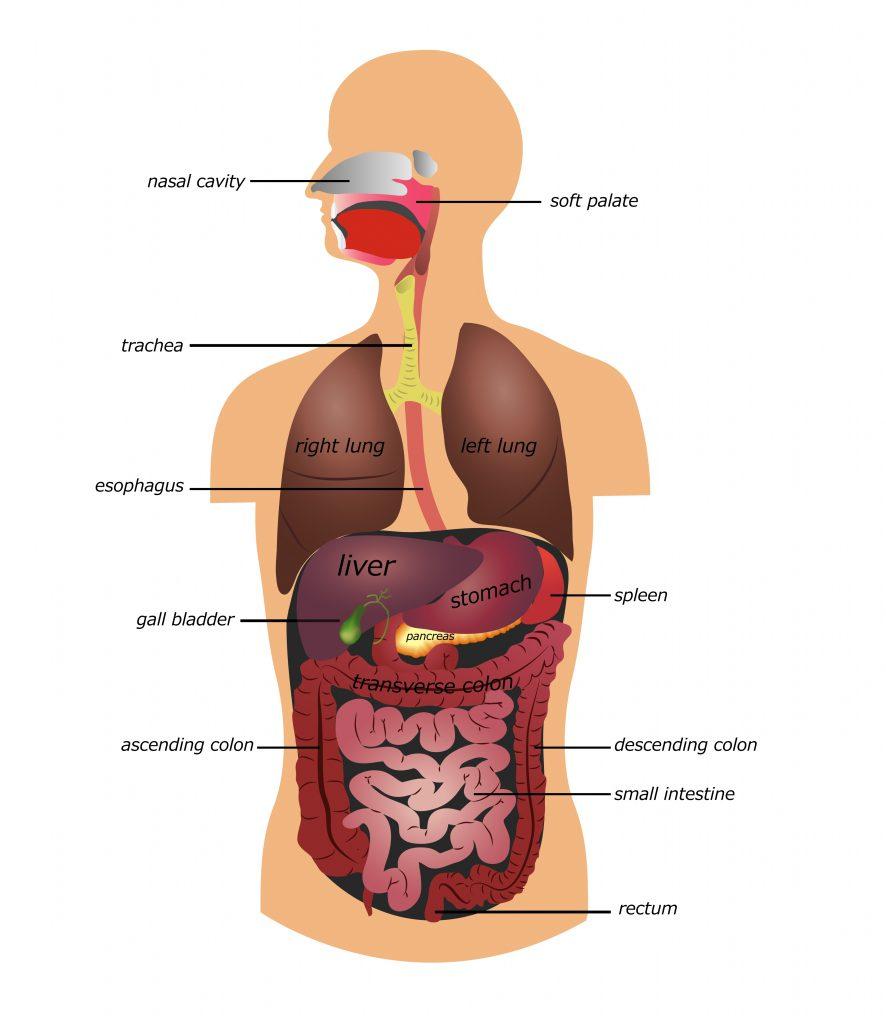 ostomy, colostomy, ileostomy | jackson siegelbaum gastroenterology
